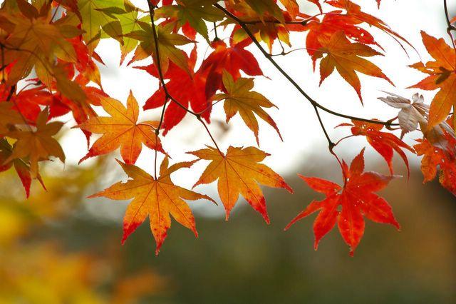 Поделки из листьев: венки, фото рамки, украшения