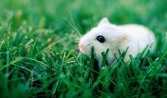 Сказка о трусливом мышонке