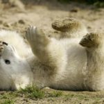 Мой ребенок – неуклюжий медвежонок